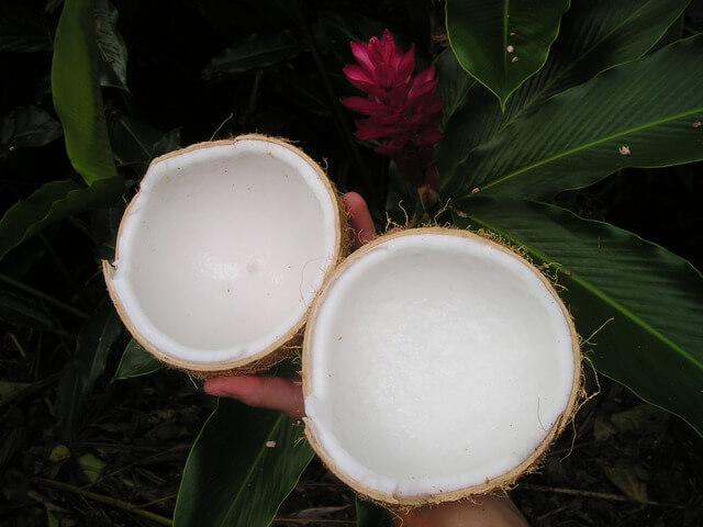 Dwie połówki kokosa na dłoni