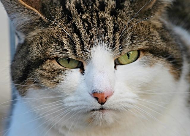 kot spogląda z dezaprobatą