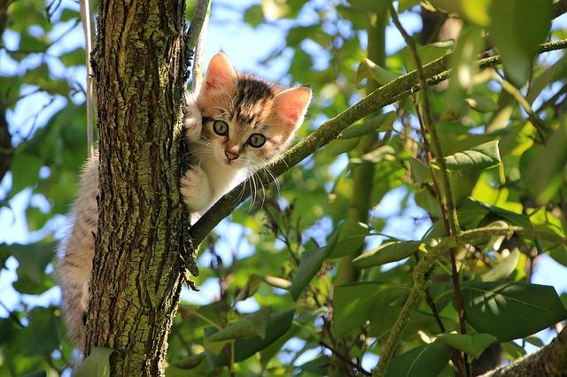 kotek na drzewie
