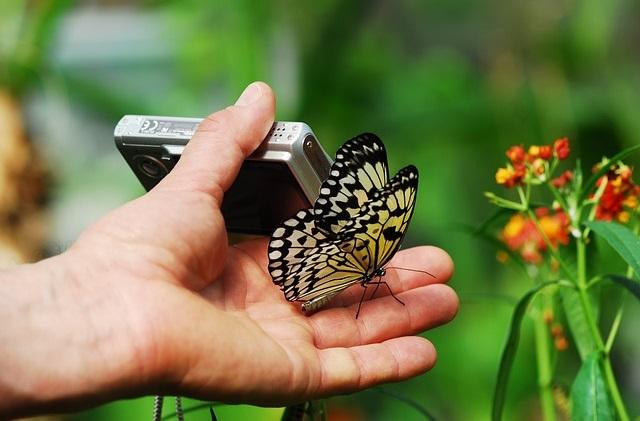 Aparate kompaktowy i motyl